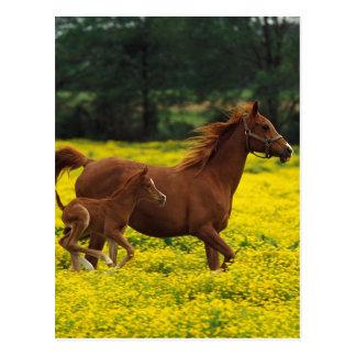 Run Baby Postcards