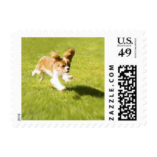 Run Puppy Run In the Yard Postage Stamp