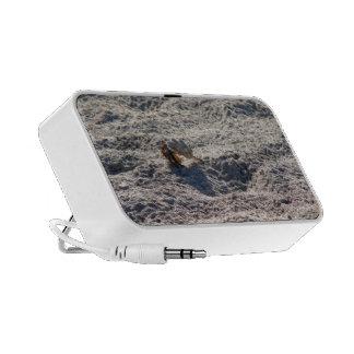 Runaway Hermit Crab iPod Speaker