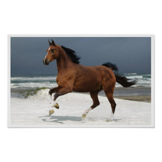 Runing Horse at the Beach Art Print Poster