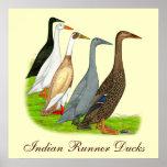Runner Duck Assortment Poster