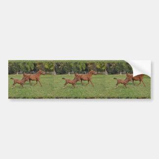 Running Arabian Horses - Mom and Foal Bumper Sticker