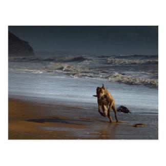 Running Brindled Lurcher Greyhound on Beach Postcard