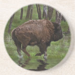 Running Buffalo & Forest, Bison-lover's Design Drink Coasters