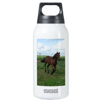 Running Colt Insulated Water Bottle