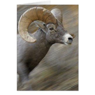 Running Desert Bighorn Card