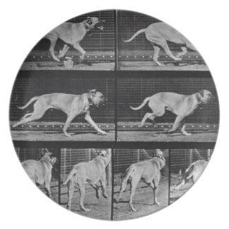 Running Dog, plate 707 from 'Animal Locomotion', 1