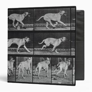 Running Dog, plate 707 from 'Animal Locomotion', 1 Binder