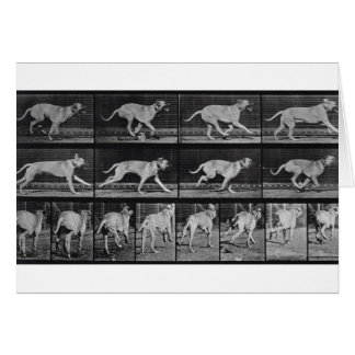 Running Dog, plate 707 from 'Animal Locomotion', 1 Card