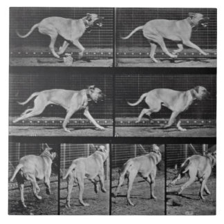Running Dog, plate 707 from 'Animal Locomotion', 1 Ceramic Tile