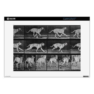 Running Dog, plate 707 from 'Animal Locomotion', 1 Laptop Skin