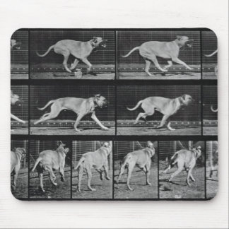 Running Dog, plate 707 from 'Animal Locomotion', 1 Mouse Pad