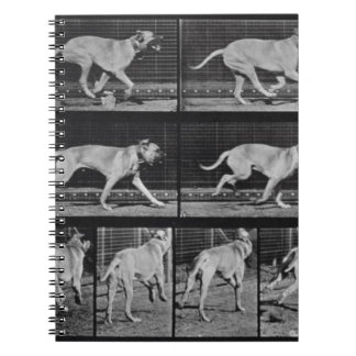 Running Dog, plate 707 from 'Animal Locomotion', 1 Notebook