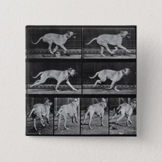 Running Dog, plate 707 from 'Animal Locomotion', 1 Pinback Button