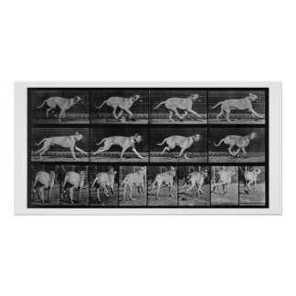 Running Dog, plate 707 from 'Animal Locomotion', 1 Poster