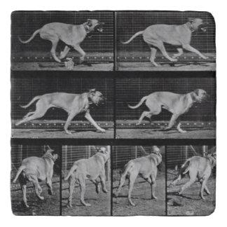 Running Dog, plate 707 from 'Animal Locomotion', 1 Trivet