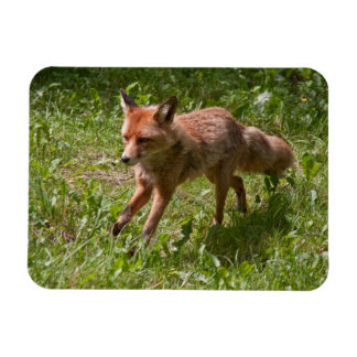 Running fox rectangular photo magnet