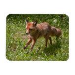 Running fox vinyl magnets