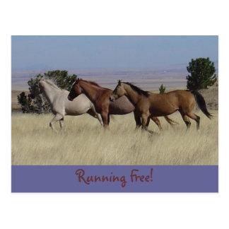 Running Free Postcard