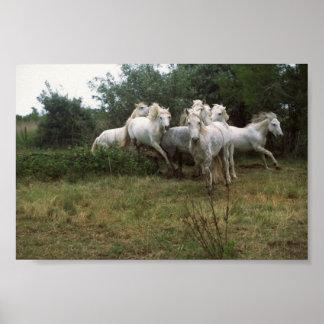 Running Grey Horse Herd Poster