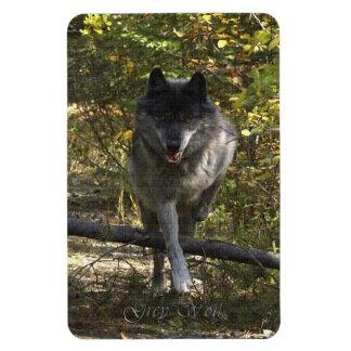 Running Grey Wolf 2 Wildlife Art Premium Magnet