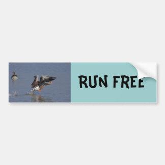 Running Greylag Goose Bumper Sticker