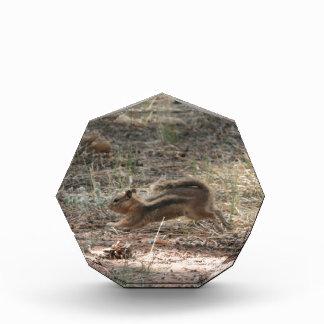 Running Ground Squirrel Award