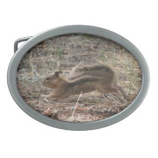 Running Ground Squirrel Oval Belt Buckle