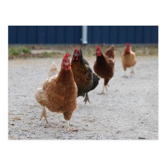 Running Hens Postcard