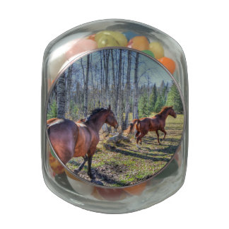 Running Herd of Horses Photo on a BC Ranch 3 Jelly Belly Candy Jar