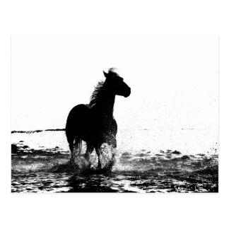 running horse animal postcard