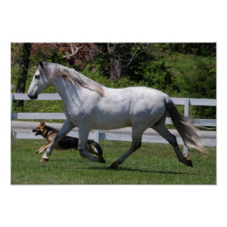 RUNNING HORSE & DOG POSTER