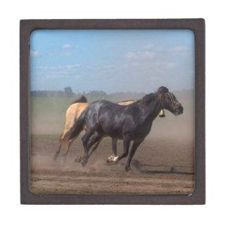 Running Horse Herd Gift Box