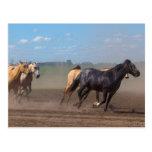 Running Horse Herd Postcard
