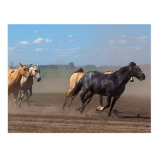 Running Horse Herd Postcard