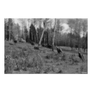 Running Horse Herd, Ranch Pasture Equine B&W Photo Poster