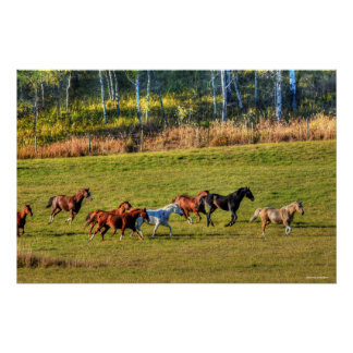 Running Horse Herd & Ranch Pasture Equine Photo Poster