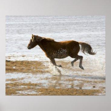 Running Horse On Beach Poster