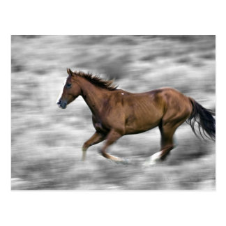 Running horse post cards