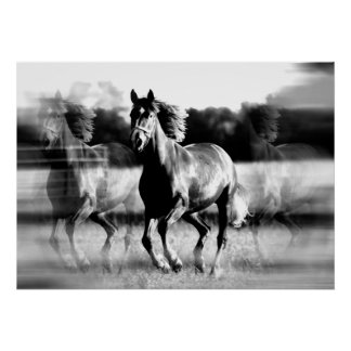 Running Horse Poster Print - B W Horse Posters