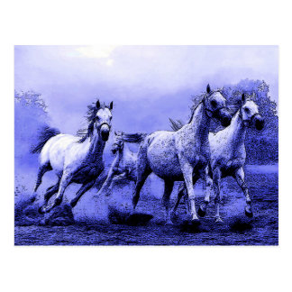 Running Horses & Blue Moonlight Postcard