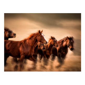 Running horses, blur and flying manes postcard