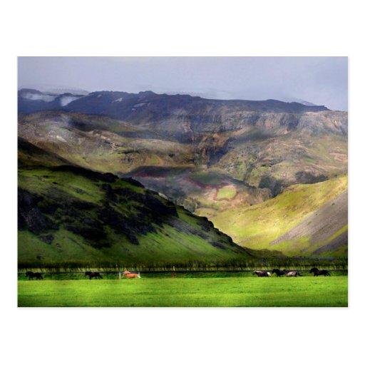 Running Horses Iceland Post Card