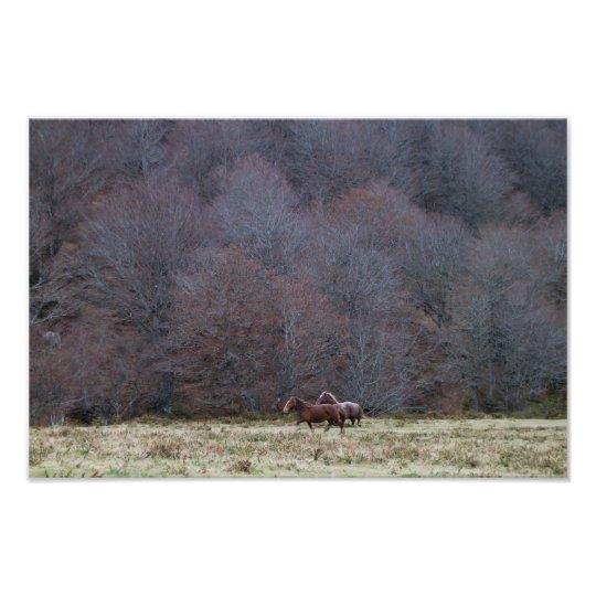 Running Horses Photo