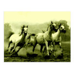 Running Horses Postcards