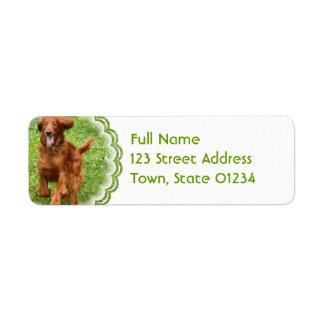 Running Irish Setter Mailing Labels