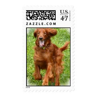 Running Irish Setter Postage Stamp