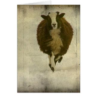 Running Lambchops Card