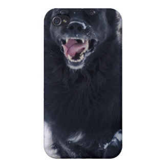 Running Newfoundland Dog iPhone Case