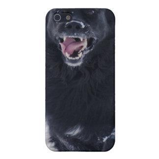 Running Newfoundland Dog iPhone Case iPhone 5 Cases